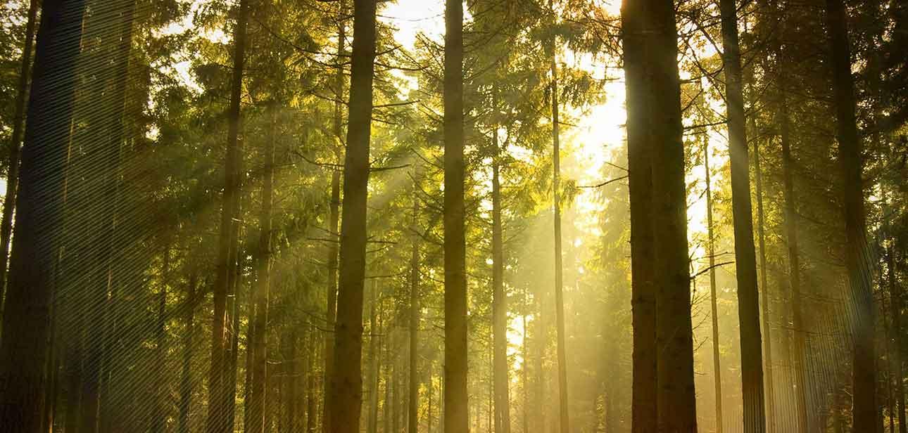 tree-s